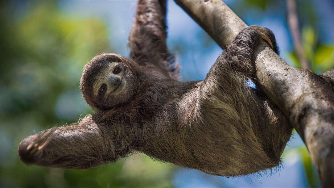 Sloths PREMIUM